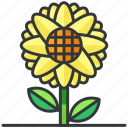 ecology, flower, nature, plant, sunflower icon