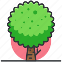forest, nature, park, plant, tree, trees icon