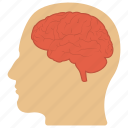 head and brain, human head, natural intelligence, nervous system, neurology icon