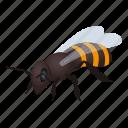 bee, honey, honeybee, isometric, logo, object, wasp icon