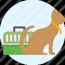 cat, pet, pets, shop
