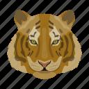 animal, cat, mammal, predator, tiger, wild, zoo