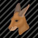 animal, australian, kangaroo, mammal, marsupial, wild, zoo