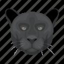 animal, cat, mammal, panther, predator, wild, zoo
