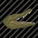 animal, crocodile, mammal, predator, reptile, wild, zoo