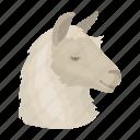 alpaca, animal, llama, mammal, wild, wool, zoo