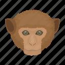 animal, apes, mammal, monkey, primate, wild, zoo