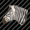 animal, herbivore, mammal, ungulate, wild, zebra, zoo