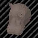 animal, herbivore, hippopotamus, mammal, ungulate, wild, zoo