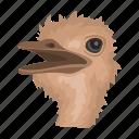 ostrich, animal, wild, mammal, zoo, bird