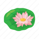 plant, flower, beauty, lotus, petal, floral, cartoon