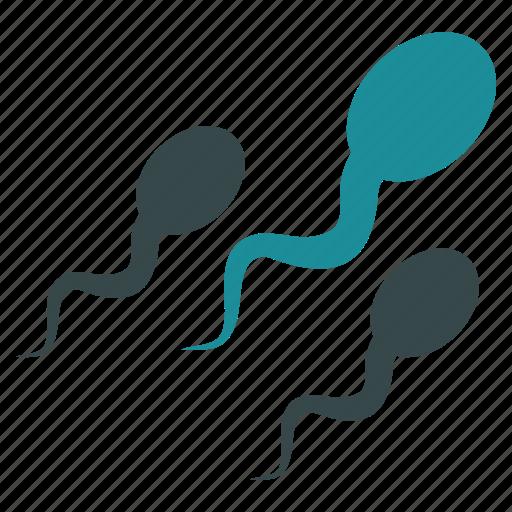 fertilization, human, ovary, sperm, spermatozoon, veneric, virus icon