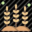 branch, cereal, grain, nature, rice, supermarket, wheat icon
