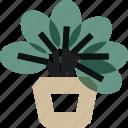 flowerpot, leaf, plant, pot, retrofurniture, tree, vase icon