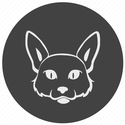 avatar, cat, face, kitty, round icon