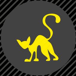 avatar, cat, kitty, night, round icon
