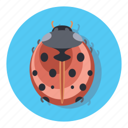 bug, protect, security, virus icon