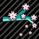 branch, cherry blossom, festival, japanese, sakura
