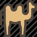 animal, arab, camel, mammal