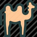 animal, arab, camel, mamal