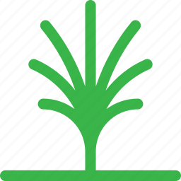 dessert, forest, green, grow, nature, palm, tree icon