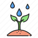 sprout, green, plant, leaf, nature, fresh, organic