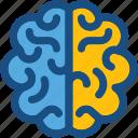 body organ, body part, brain, human brain, human organ icon