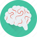 body part, brain, human brain, intelligence, organ icon