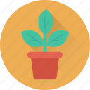 flower, greenery, nature, plant, plant pot icon
