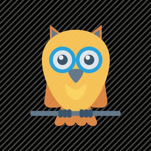 bird, education, owl, professor icon