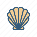 beach, ocean, seashell, shell