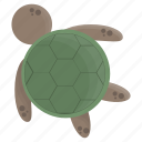animal, animals, cute, cutie, sea, turtule icon