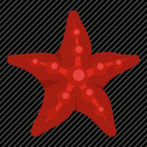 marine, nature, ocean, sea, seashell, starfish, tropical icon