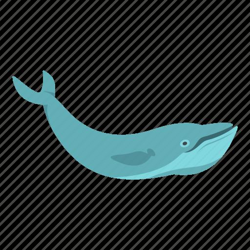 animal, mammal, marine, ocean, sea, underwater, whale icon