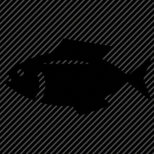fish, fish food, fishing, herring, seafood icon