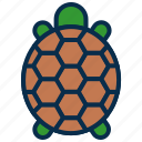 animal, mammal, ocean, reptile, sea, turtle