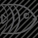 angelfish, aquatic animal, creature, sea life, specie, submarine icon