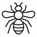 honeybee, bee, insect, stingless