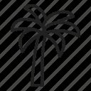 palm tree, coconut tree, tropical, island