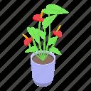 flower, allergy, isometric