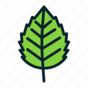 autumn, birch, elm, fall, leaf, nature, season icon