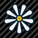 blossom, bud, chamomile, flora, flower, spring, summer icon