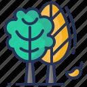 autumn, fall, leaves, tree