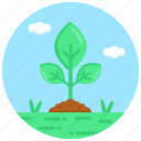 sapling, sprouting, germination, plantation, nature