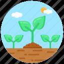 sapling, sprouting, germination, plantation, seedling