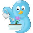 bird, flower, spring