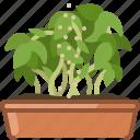 earthen, fertilization, flowerpot, gardening, seeding, vegetation