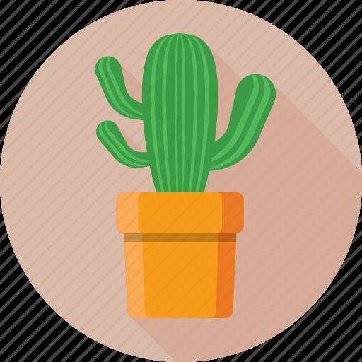 cactaceae, cactus, desert, plant, pot icon