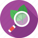 botany, leaf, magnifier, organic seo, research icon