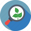 botany, leaf, magnifier, organic seo, research